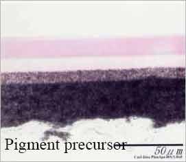 Pigment Precursor